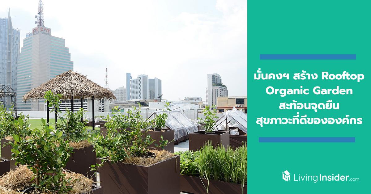 มั่นคงฯ สร้าง Rooftop Organic Garden ชวนพนักงานเพิ่มพื้นที่สีเขียว ปลูกผักอินทรีย์สะท้อนจุดยืน ...
