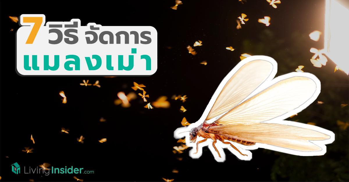 7 วิธีจัดการแมลงเม่า ศัตรูตัวฉกาจของบ้านคุณ