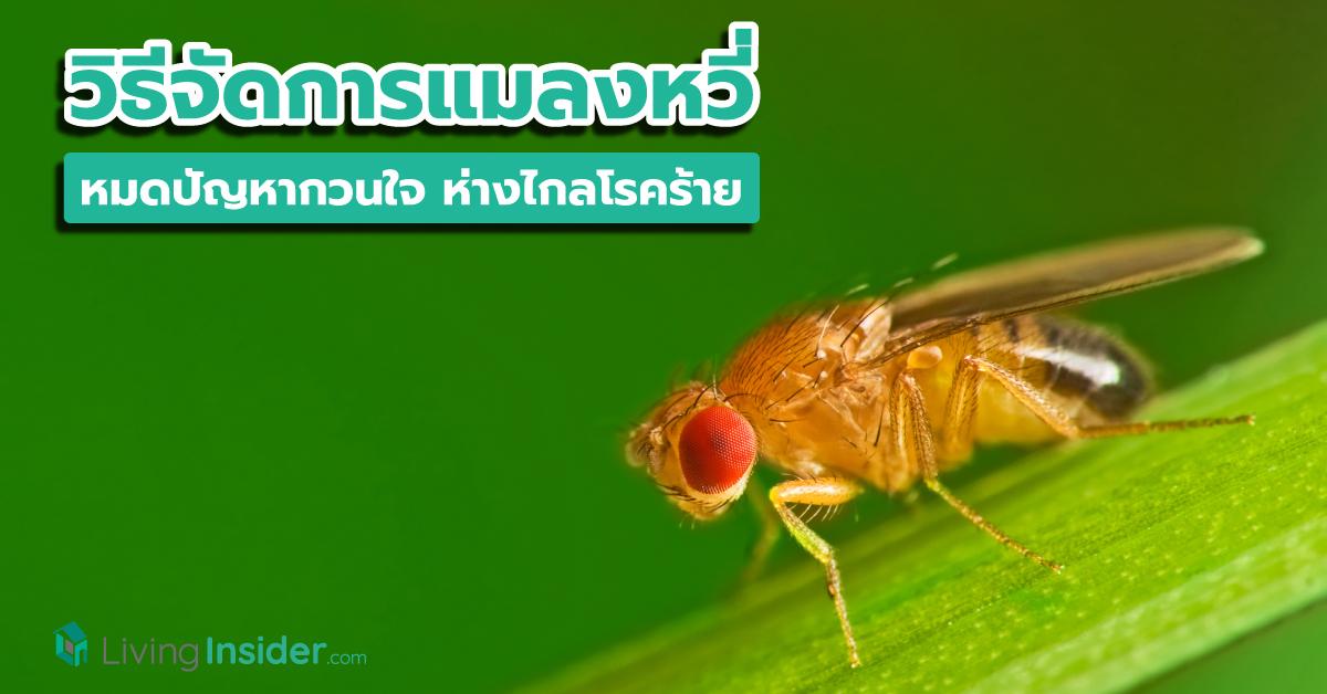 รวมวิธีจัดการแมลงหวี่ หมดปัญหากวนใจ ห่างไกลโรคร้าย