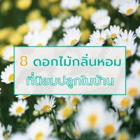8 ดอกไม้กลิ่นหอม ที่นิยมปลูกในบ้าน