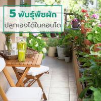 5 พันธุ์พืชผัก ปลูกเองได้ในคอนโด