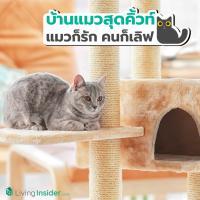 ไอเดียบ้านแมวสุดคิ้วท์ แมวก็รัก คนก็เลิฟ