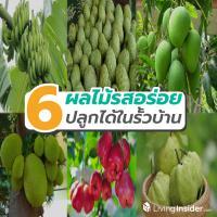 6 ผลไม้รสอร่อย ปลูกได้ง่าย ๆ ในรั้วบ้าน