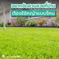 อยากจัดสวนที่บ้าน ต้องใช้หญ้าแบบไหน ? ทำความรู้จักหญ้าแต่ละชนิดก่อนตัดสินใจเลือกมาแต่งสวน