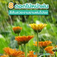 8 ดอกไม้หน้าฝนที่ควรหามาปลูกที่บ้าน เพิ่มสีสันสวยงามยามฝนโปรย