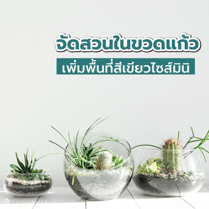 จัดสวนในขวดแก้ว เพิ่มพื้นที่สีเขียวไซส์มินิ