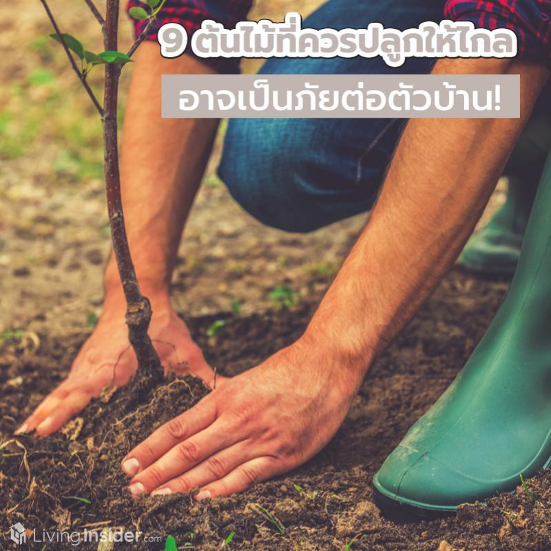9 ต้นไม้ที่ควรปลูกให้ไกล อาจเป็นภัยต่อตัวบ้าน!