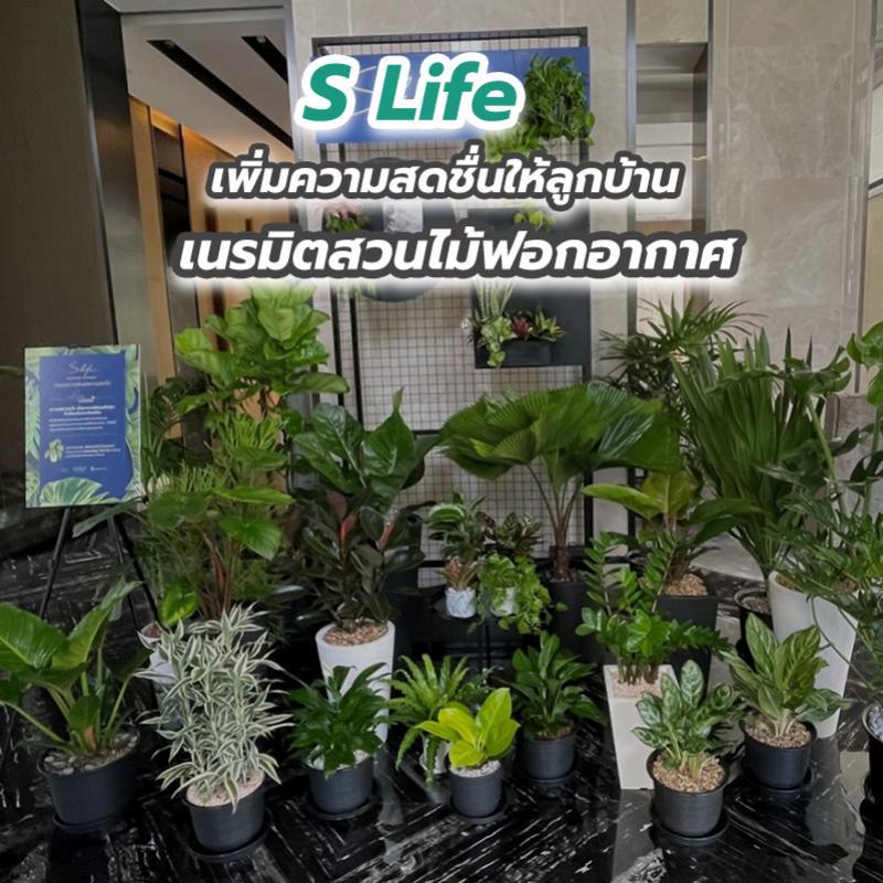 S Life เพิ่มความสดชื่นให้ลูกบ้าน เนรมิตสวนไม้ฟอกอากาศ