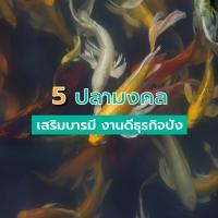 5 ปลามงคล เสริมบารมี งานดีธุรกิจปัง