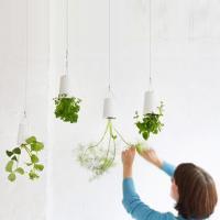 ปลูกต้นไม้แนวใหม่กับ Sky Plant ปลูกง่ายๆที่คอนโดของคุณ
