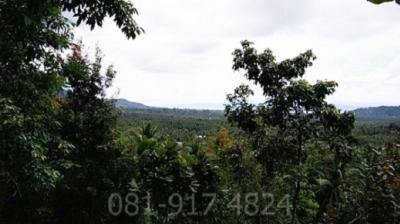 For SaleLandSurat Thani : Land for sale 10 Rai, the most beautiful viewpoint, Koh Phangan, Good location, on Koh Pha-ngan road, Ko Pha-ngan district, Surat Thani province