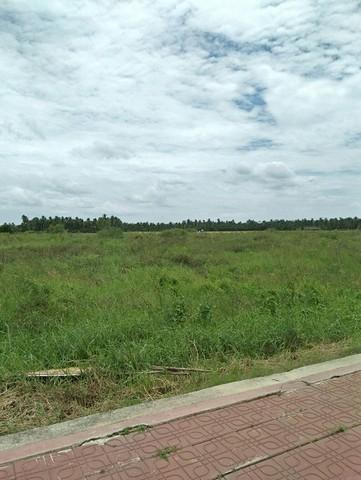 ขายที่ดินพุทธมณฑล ศาลายา : ขายที่ดินริมถนนศาลายา-นครชัยศรี ใกล้เซ็นทรัลศาลายา ผังเมืองสีชมพู