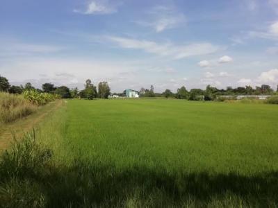 ขายที่ดินอยุธยา สุพรรณบุรี : ขายที่ดินทำเลดี บางปะหัน จ.อยุธยา ทำเลดี เหมาะทำร้านกาแฟ สวนเกษตรอินทรีย์ ปลูกบ้าน ธรรมชาติสุดๆ ไร่ละ ไม่ถึง ล้าน