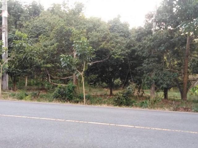 ขายที่ดินจันทบุรี : ขายที่ดิน 36 ไร่จังหวัดจันทบุรีติดถนนหมายเลข3406 พร้อมสวนผลไม้