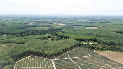 For SaleLandRayong : Code 0099 Land, 10 rai of title deed, over 4.65 kilometers, Klaeng District, Rayong Province. Nature near Khao Chamao, Nam Nam Rai, near Sukhumvit