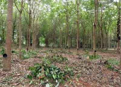เช่าที่ดินตราด : ให้เช่าที่ดินพร้อมบ้านมีปลูกยางในพื้นที่ ติดถ.สุขุมวิท ตราด 56ไร่