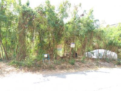 For RentLandPinklao, Charansanitwong : Land reclamation, 246 square wah, Phutthamonthon Sai 3 Rd., Assumption Soi 14, Bang Phai Thawi Watthana