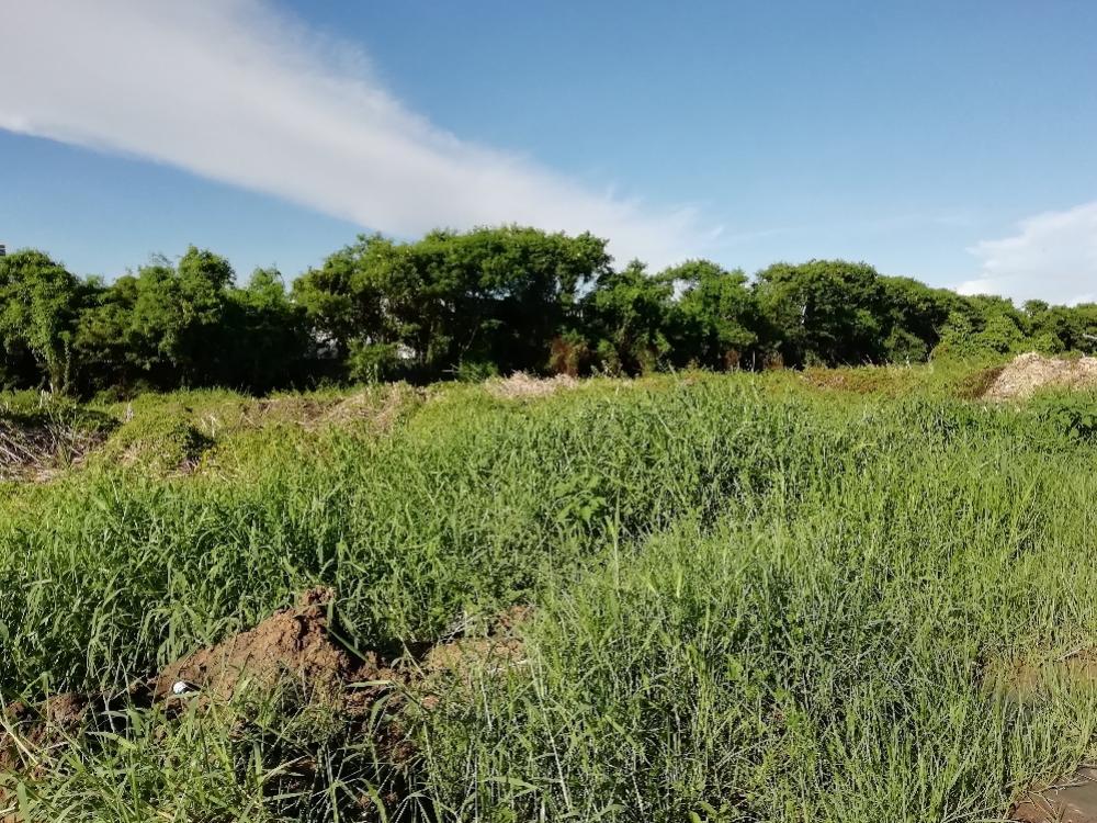 ขายที่ดินบางนา แบริ่ง : ขายถูกมาก แบ่งขายที่ดินถนนบางนา กม 4.5 (ตรว.ละ 50000 บาท) อยู่ฝั่งขาเข้า กทม.  ที่ดินอยู่ในซอยปลัดเปรียง ใกล้หมู่บ้านเลคไซด์ 1