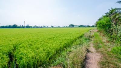 For SaleLandPhutthamonthon, Salaya : Land for sale in Nakhon Pathom Nakhon Chai Si District That is pretty near the highway project Bang Yai - Kanchanaburi (M81) # Sale by owner