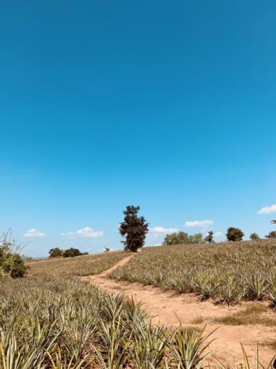 ขายที่ดินเชียงราย : ที่ดินติดทะเลสาบเชียงแสน 90 ไร่เศษ ขายด่วน รับนายหน้าช่วยขายติดต่อด่วน