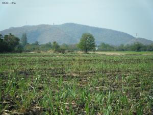 For SaleLandNakhon Sawan : Land for sale, 28 rai, reclamated, Takhli, Nakhon Sawan