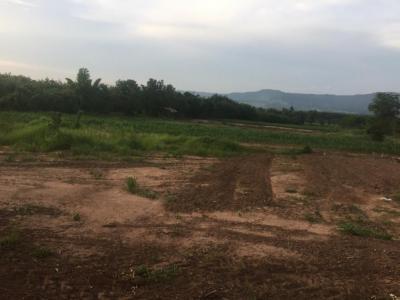 For SaleLandPhitsanulok : Land for sale in Phitsanulok Province, 3 rai, 55 square meters