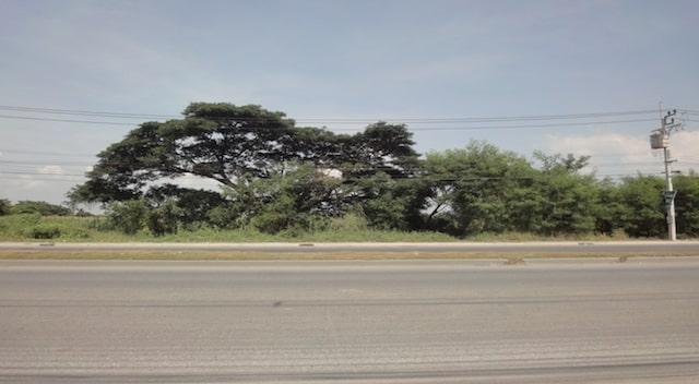 ขายที่ดินสำโรง สมุทรปราการ : SALE LAND AT THEPARAK KM.25