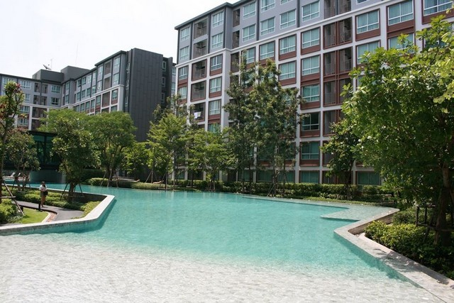For RentCondoChiang Mai, Chiang Rai : For rent D condo Ping, near Central Festival Chiang Mai, pool view
