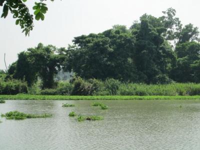 ขายที่ดินนครปฐม พุทธมณฑล ศาลายา : ขายที่ดินสวย 13 ไร่ ติดริมแม่น้ำนครชัยศรี นครปฐม ใกล้มอเตอร์เวย์เพียง 2 กิโลเมตร