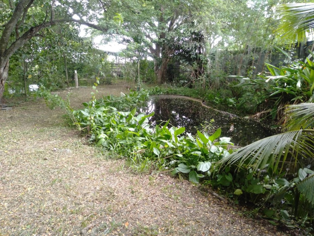 For RentLandRamkhamhaeng,Min Buri, Romklao : 🔥 Urgent 🔥 for rent of land The atmosphere of a garden house in Bangkok, suitable for cafe / food in the garden. Location near the train