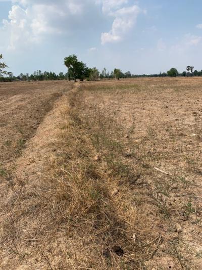 For SaleLandSuphan Buri : 👉 Land for sale in Suphan Buri Province, U Thong District, 20 rai, selling cheap, 170,000 baht per rai, contact me quickly! beautiful, suitable for farming