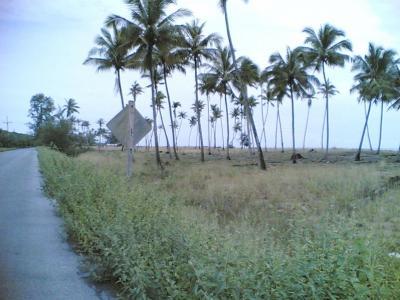 ขายที่ดินปัตตานี : ขายที่ดินติดทะเล หาดตะโละกะโปร์ 24 ไร่ แหลมโพธิ์ อ.ยะหริ่ง ปัตตานี