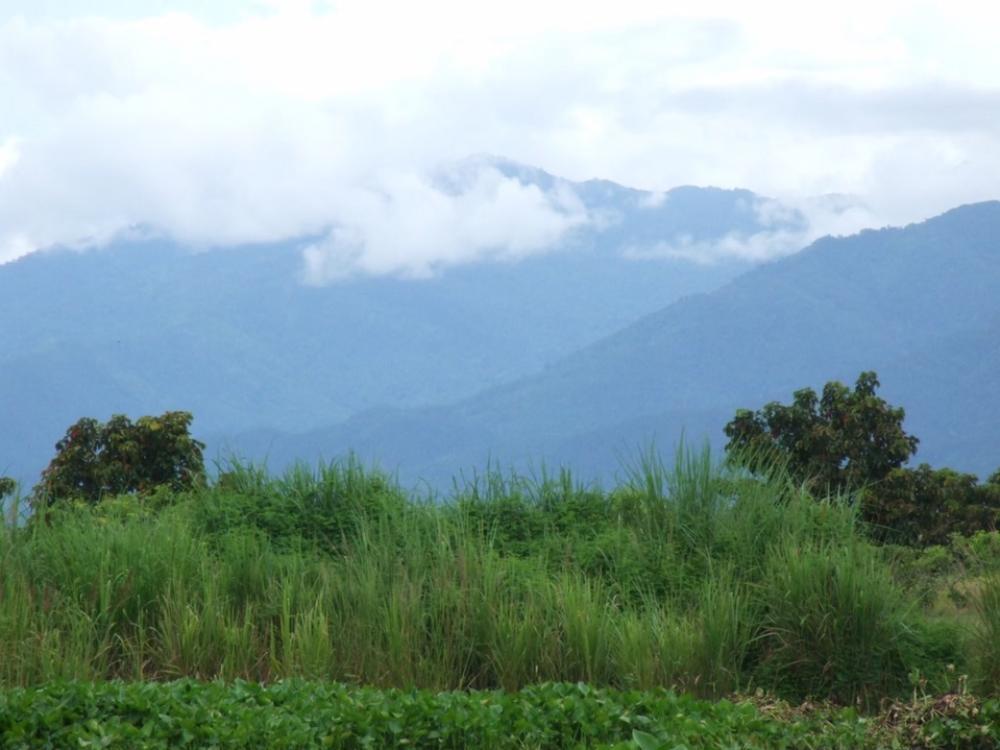 For SaleLandChiang Rai : Land Chiangrai & 6 Bungalows for Sale  383 RaiNorthpart of Thailand, near Thai - Laos Friendship Bridge.  Infront of Land is Ing RiverCall Apple 083 422 6356Line Id Apple1980k