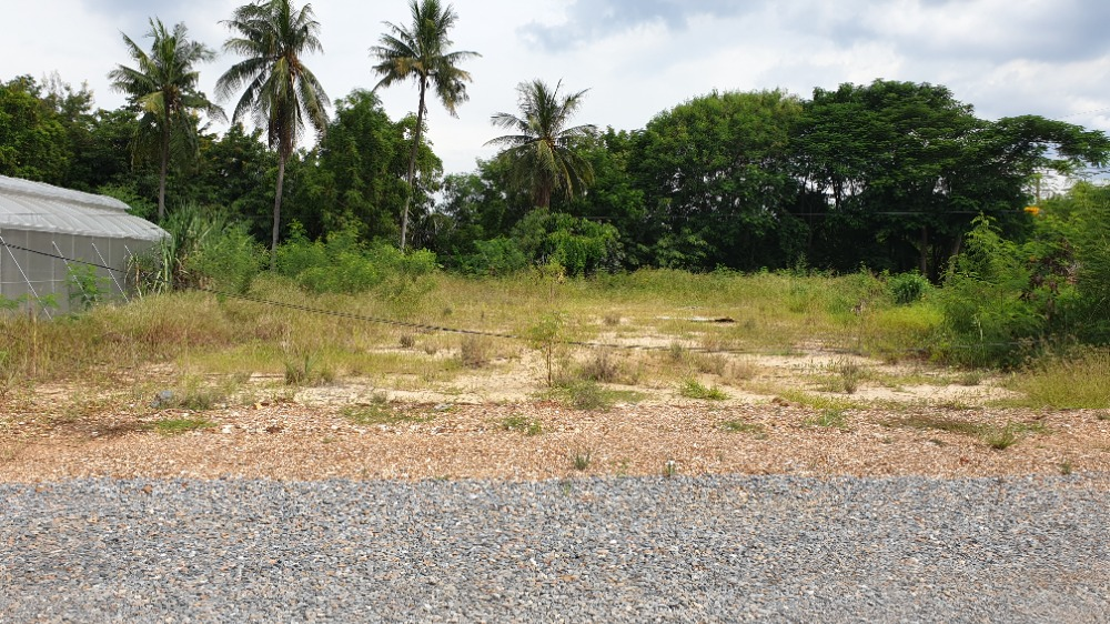 For RentLandPhutthamonthon, Salaya : Cheap land for rent, land reclamation, area 2 jobs, over Klong Yong, Salaya