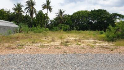 For RentLandNakhon Pathom, Phutthamonthon, Salaya : Cheap land for rent, land reclamation, area 2 jobs, over Klong Yong, Salaya