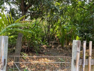 For SaleLandWongwianyai, Charoennakor : ขายที่ดินเปล่า 195 ตารางวา ถนนลาดหญ้า-วงเวียนใหญ่ Ref.A01200401