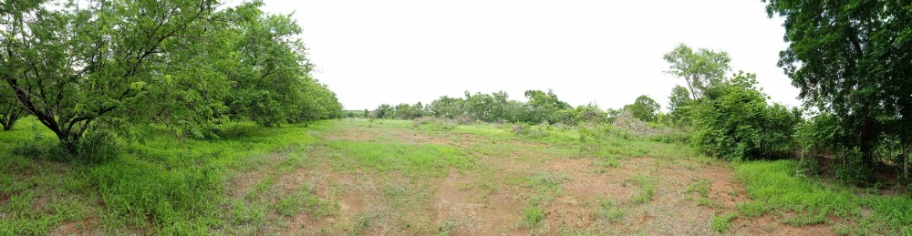 For SaleLandLop Buri : Land for sale or rent in Nong Muang District, Lopburi Province.