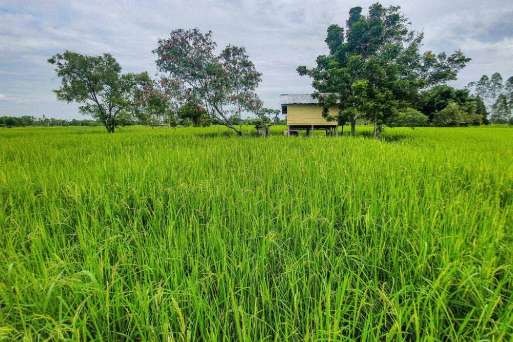 For SaleLandUdon Thani : Quick sale! Land for sale (the owner sells by himself) land 6 rai 18 square wah, beautiful plot, Nonsung, Udon Thani - Urgently needed for sale !! Non Sung Subdistrict, Udon Thani Province