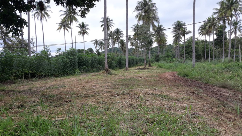 For SaleLandKorat KhaoYai : Vacant land on black road passing through Pak Chong district