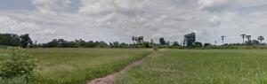 For SaleLandNakhon Sawan : Land for sale 5 rai, Kao Liao District, Nakhon Sawan Province