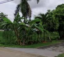 For SaleLandNawamin, Ramindra : Land for sale, good location, Ramintra 65.