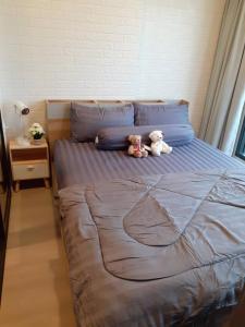 For RentCondoKasetsart, Ratchayothin : For rent Ciela Sripratum New room, BTS just door step