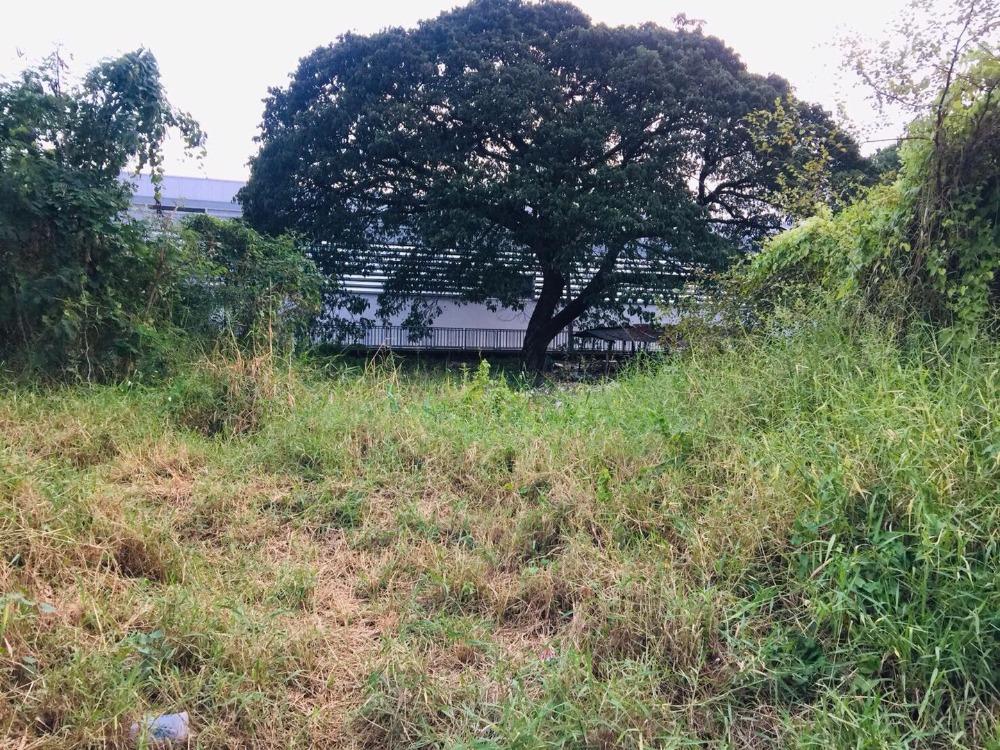 ขายที่ดินพัฒนาการ ศรีนครินทร์ : ขายด่วนที่ดินอ่อนนุช46
