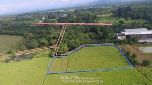 ขายที่ดินนครนายก : ที่ดิน 3 ไร่ 1 งาน โฉนดครุฑแดง ขายยกแปลงทั้งหมดรวมโอน 1.83 ล้านบาท