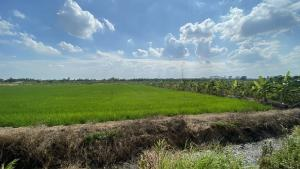For SaleLandRangsit, Patumtani : # Urgent sale # Land, Nong Suea District, Khlong 10 Pathum Thani Province