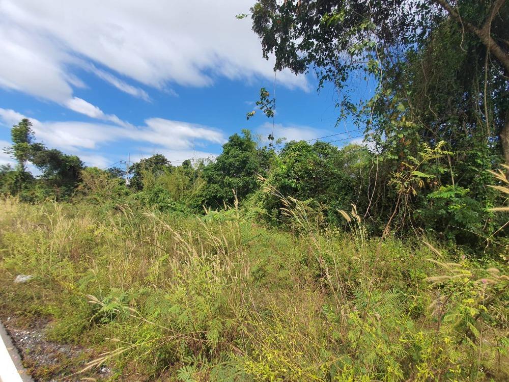 For SaleLandPrachin Buri : Urgent sale, 7 rai of land, Khok Mai Lai Subdistrict, Mueang District, Prachinburi Province, next to Nakhon Nayok, planting 700 Agarwood trees for 20 years