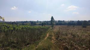 For SaleLandKorat KhaoYai Pak Chong : Land for sale 30 rai, next to Wang Nam Khiao, Wat Sub Sai Thong.