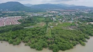 ขายที่ดินภูเก็ต ป่าตอง : ขายที่ดิน ติดป่าโกงกาง ต.เกาะแก้ว อ.เมือง จ.ภูเก็ต พร้อมโอน