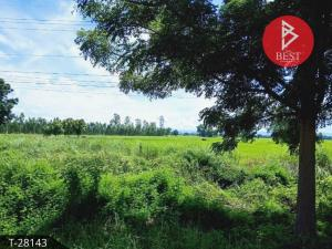 For SaleLandPhitsanulok : Land for sale in the area of 8 rai 1 ngan 67.0 square meters, Bang Krathum, Phitsanulok.