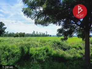 For SaleLandPhitsanulok : Land for sale 7 rai 1 ngan 48.0 square meters, Bang Krathum, Phitsanulok.